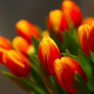 ESSENtial flowers. 2013